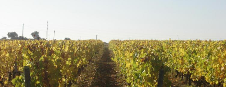 Exploitation viticole HVE